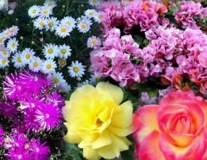 Revived Fleurs