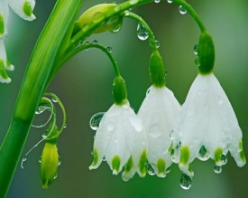sad fleurs
